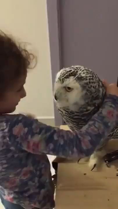 Girl and Owl