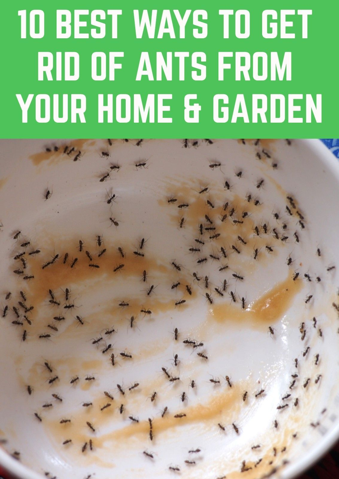 How To Get Rid Of Ants On Patio Furniture