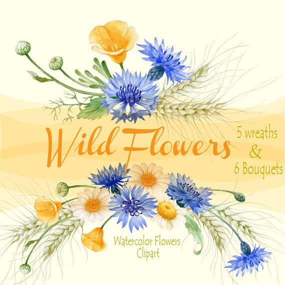 Photo of Fiori e ghirlande di fiori selvatici dell'acquerello Clipart dipinto a mano – fiordalisi, camomille, spezie, scrapbooking, inviti di nozze