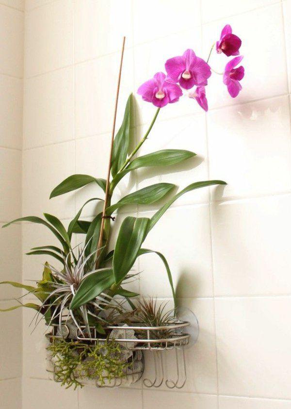 Zimmerpflanzen bilder gem tliche deko ideen mit for Wanddeko pflanzen