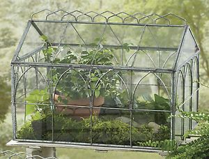 """Antique Wardian Case   Glass Terrariums by Park Designs, 14"""" Wide, Pick Small or Large, Metal ..."""