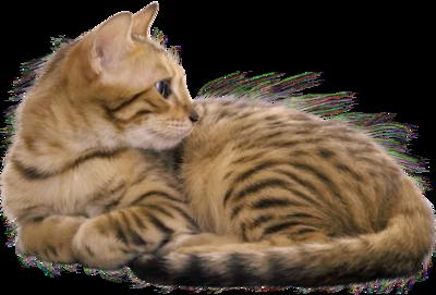 chatons,chats,cat,gato,Katze,katter,kettir,cait, Mačka