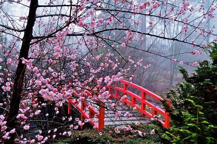 Cherry Blossom Week Ikebana Origami Japan Travel Japanese Garden Tea Garden