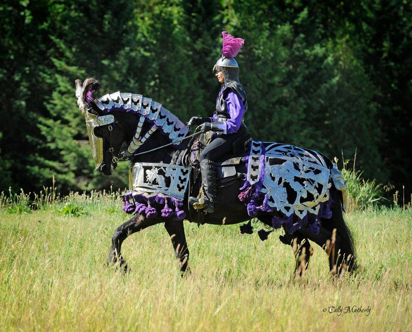 Costume Fun - Starry Knight Friesians & Costume Fun - Starry Knight Friesians | Great things Algoma ...