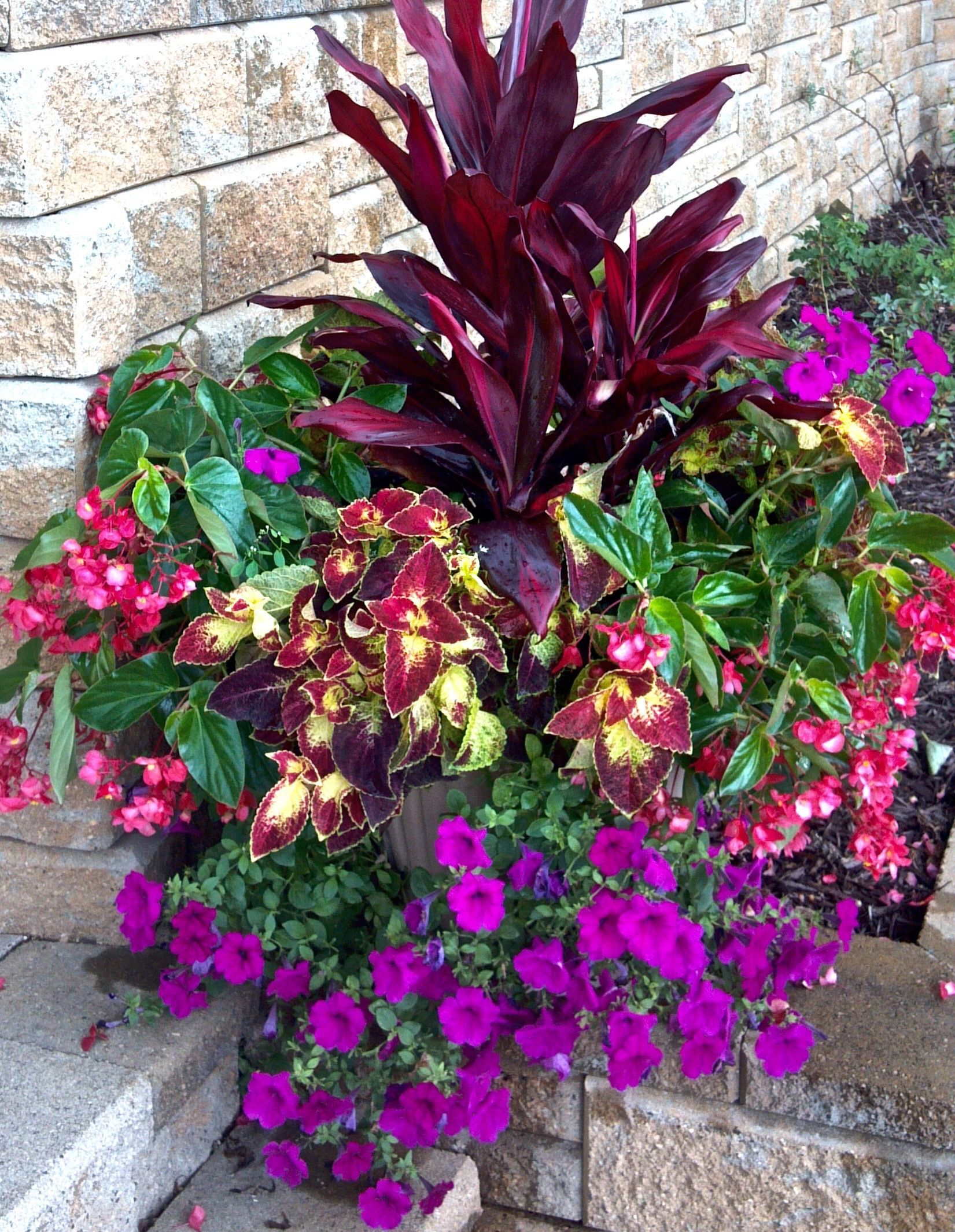 Cordyline Accent Plant With Dragonwing Begonia Dipt In Wine Coleus And Wave Petunias By Maple Crest Flower Pots Garden Flower Beds Container Gardening Flowers