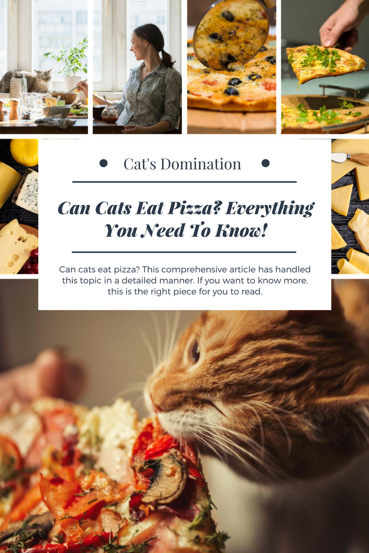 can cats eat pizza this comprehensive article has handled this