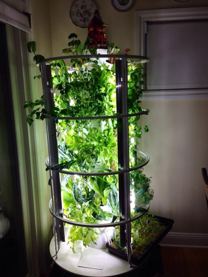 Growing veggies inside with grow lights. aeroponic
