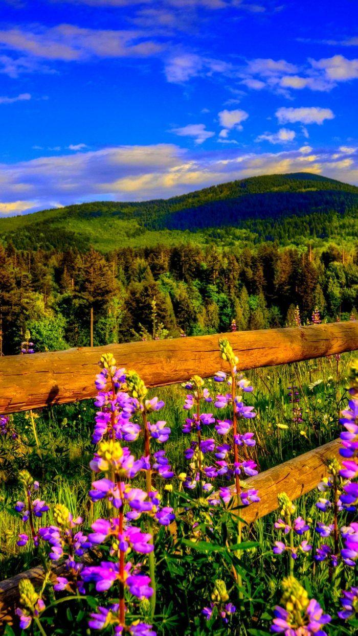 Wallpaper Iphone Rose Gold Glitter 2019 3d Iphone Wallpaper Spring Wallpaper Landscape Wallpaper Spring Wallpaper Hd