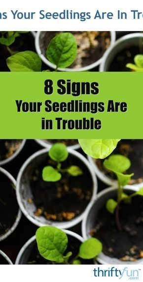 Photo of 8 Signs Your Seedlings Are In Trouble