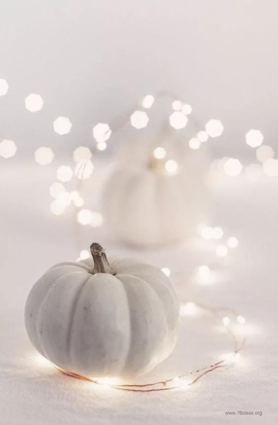صور خلفية بيضاء ساده 2020 تطبيق رفيق Pumpkin Wallpaper Pumpkin Fall Decor White Pumpkins