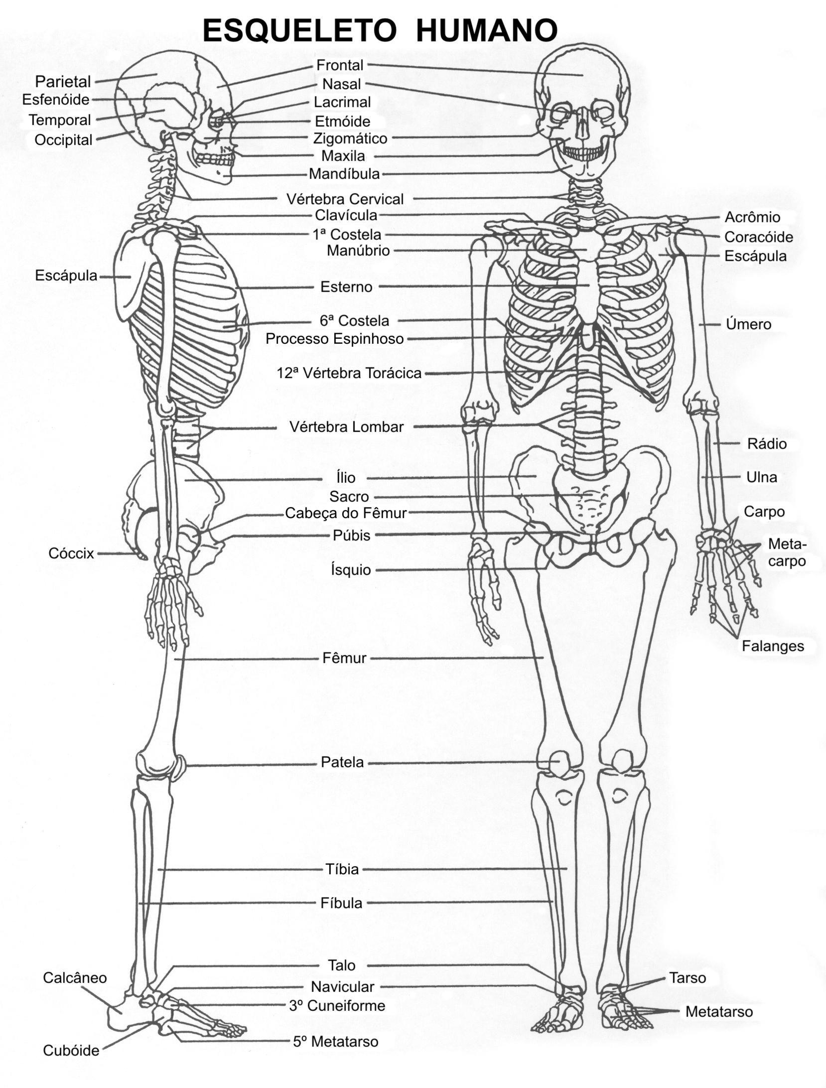 Esqueleto - Nombre de huesos | Anatomy | Pinterest | Huesos ...