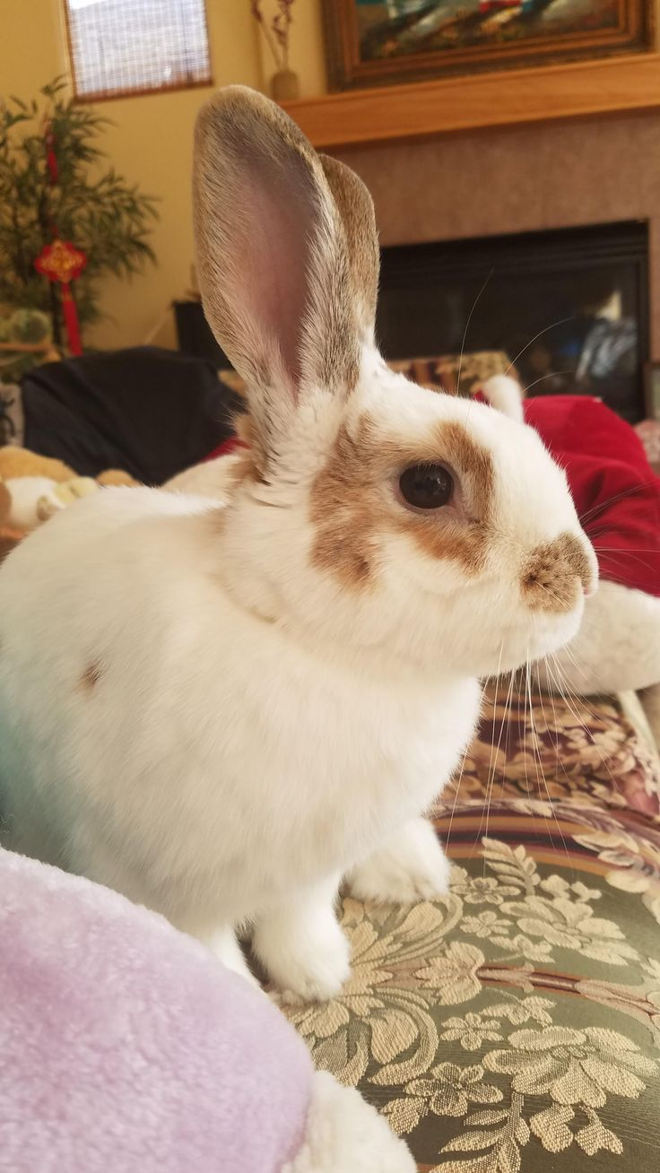 Omg cute pet rabbit funny bunnies cute pictures
