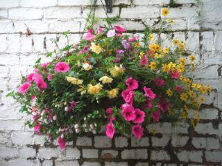 panier fleuri avec surfinias et bidens jardini res et suspensions pinterest fleuri. Black Bedroom Furniture Sets. Home Design Ideas