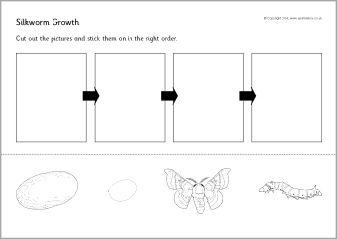 Silkworm life cycle cut and stick (SB10985) - SparkleBox | silkworm ...