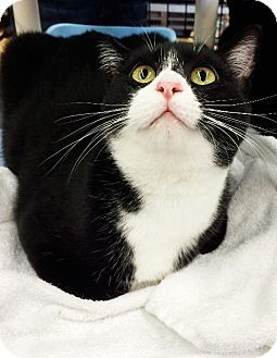 What S Black And White And Adorable All Over Sprinkles She S As Cute As They Come With Her Little Pink Nose And White Whis Kitten Adoption Pets Pet Adoption