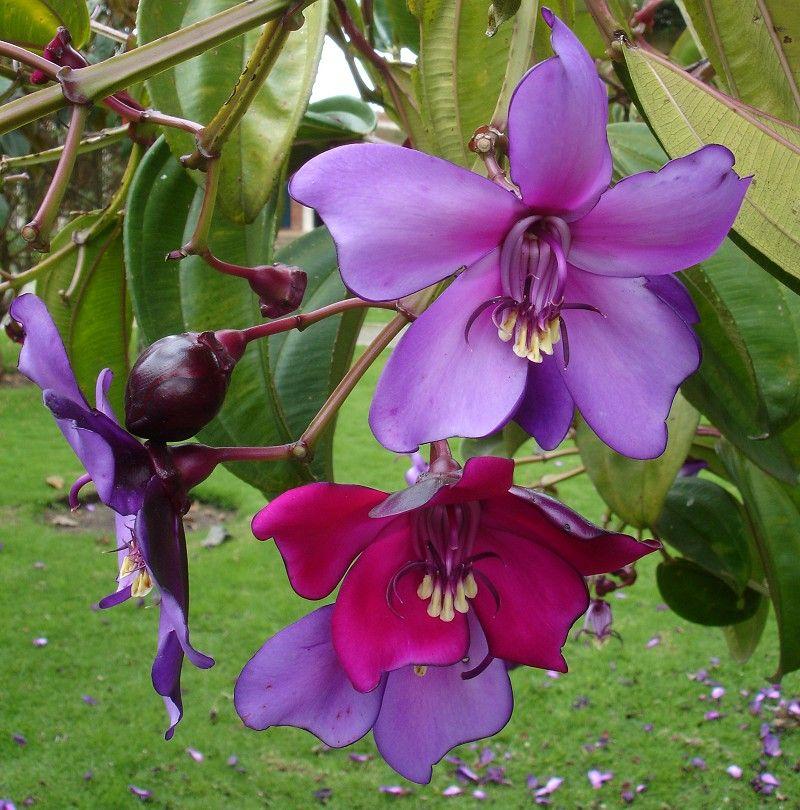 Rare Exotic Flowers – Rare Garden Plants