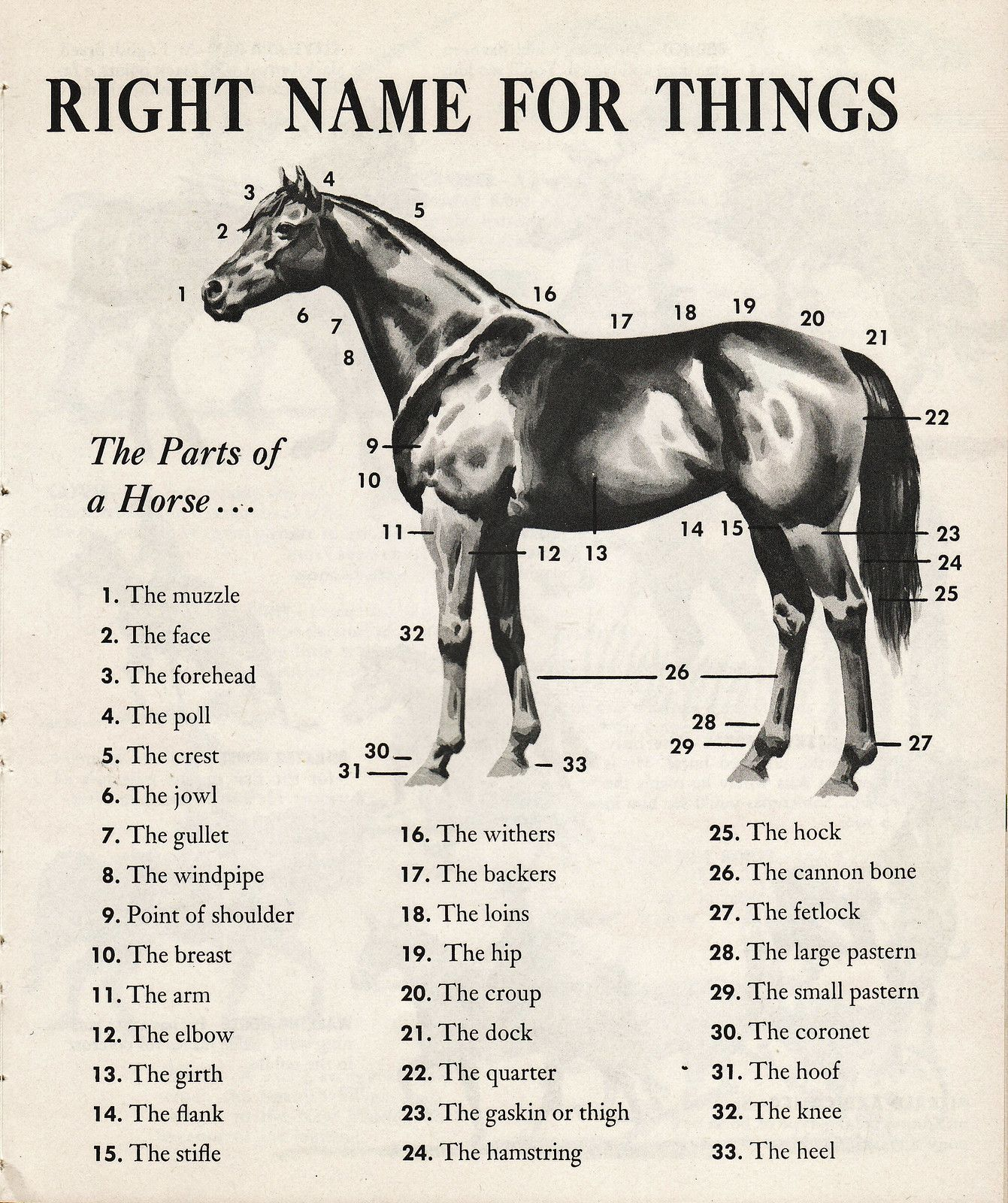 Parts Of The Horse