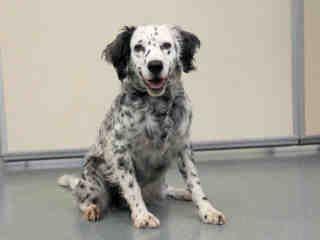 St Louis Pet Adoption Dog Adoption Humane Society Pet Adoption