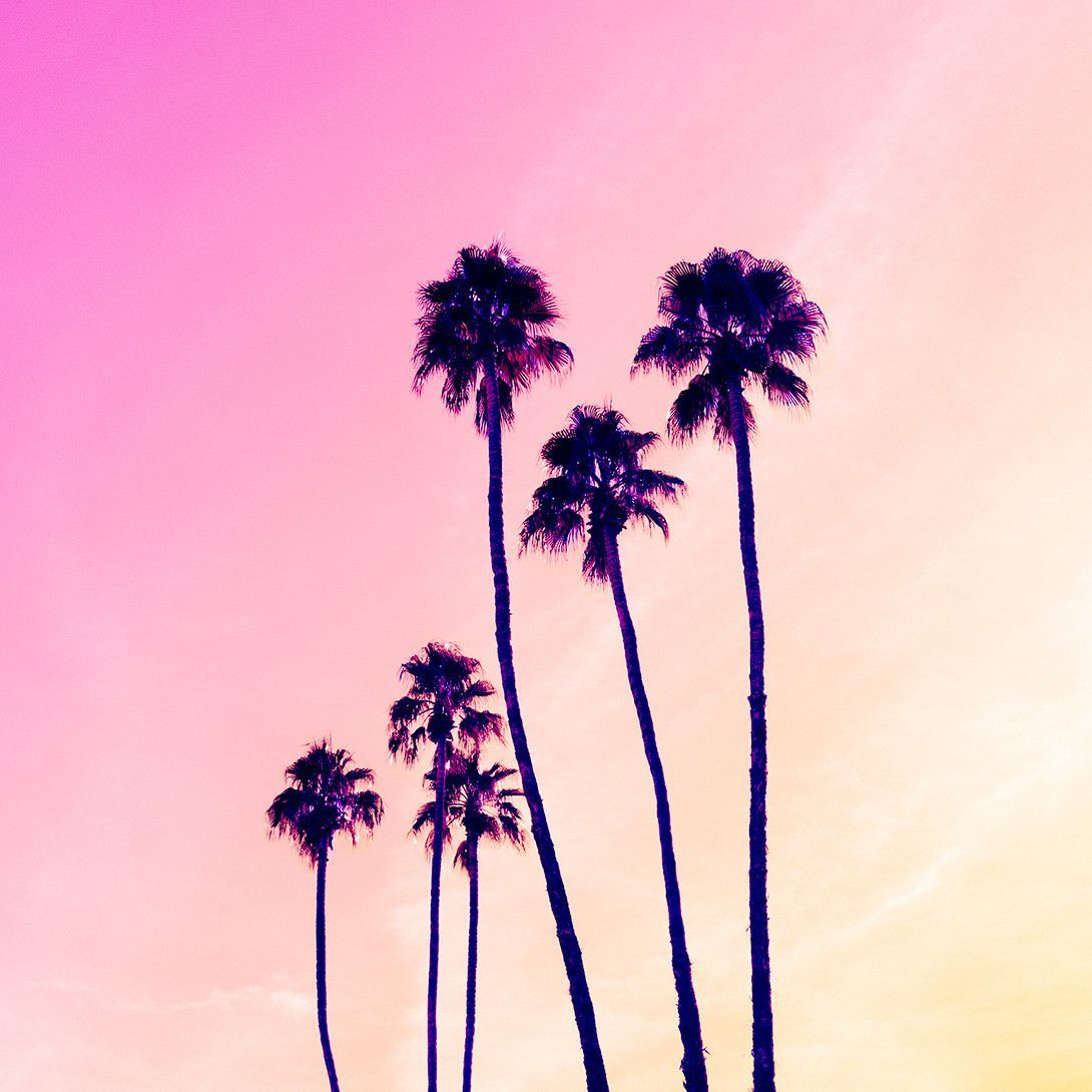 Palm Tree Iphone Wallpaper: Sweet Silhouettes