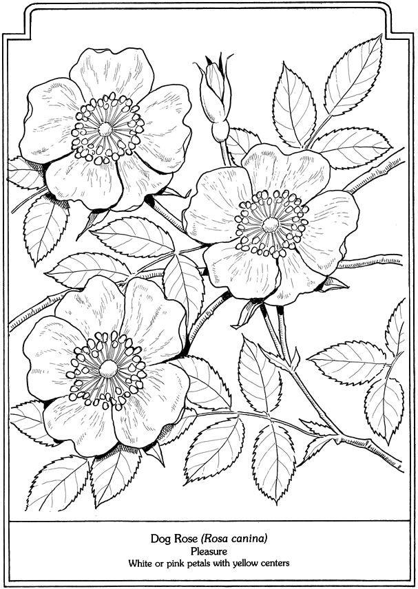 60 Desenhos para Adultos | Flores, Colorear y Dibujo