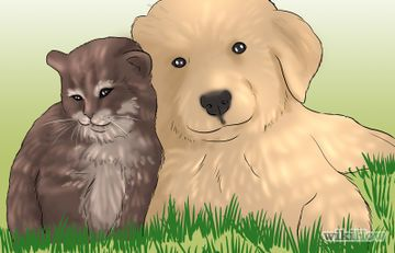 How to Introduce a New Puppy to the Resident Cat