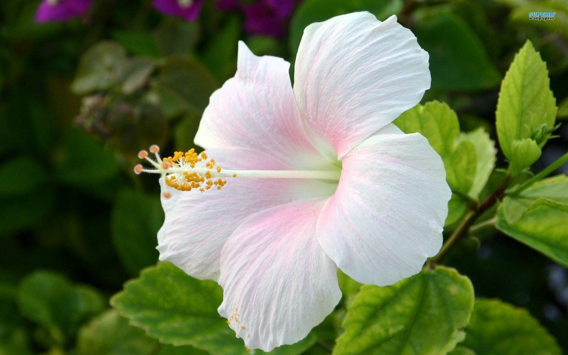 Androecium Of Hibiscus Flower Typesofflower Typesofflower