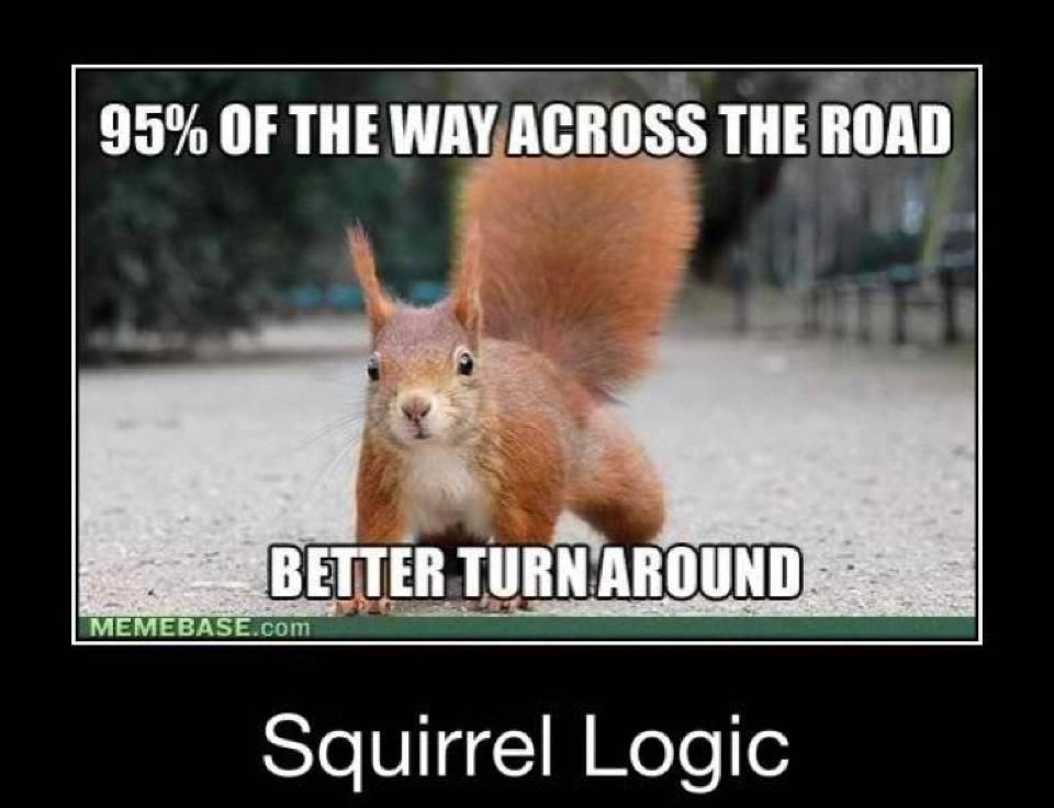 squirrels have no logic! Whatchu talkin' about? Squirrel