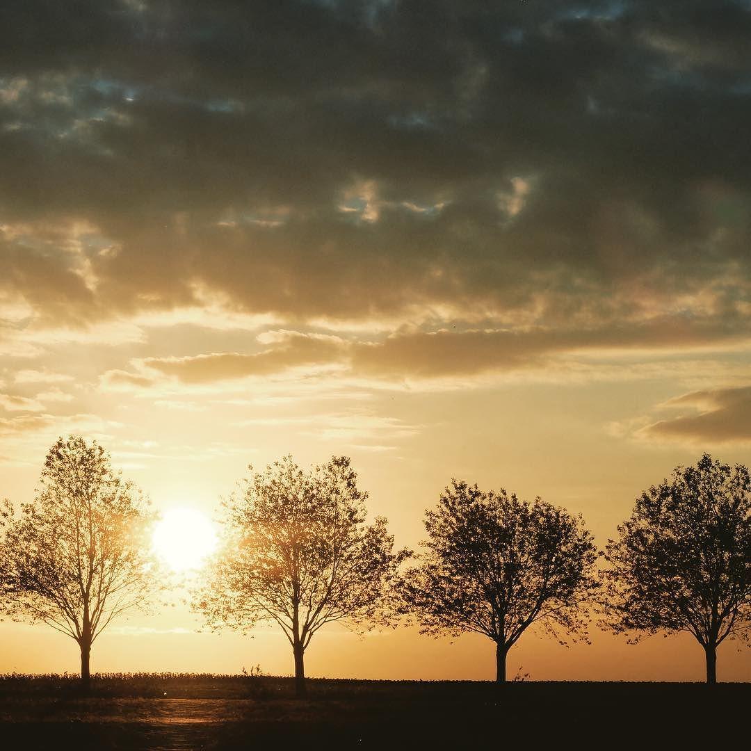 Les arbres en automne. Inspiration renouvelée. #Nature #igersfrance #deuxsevres