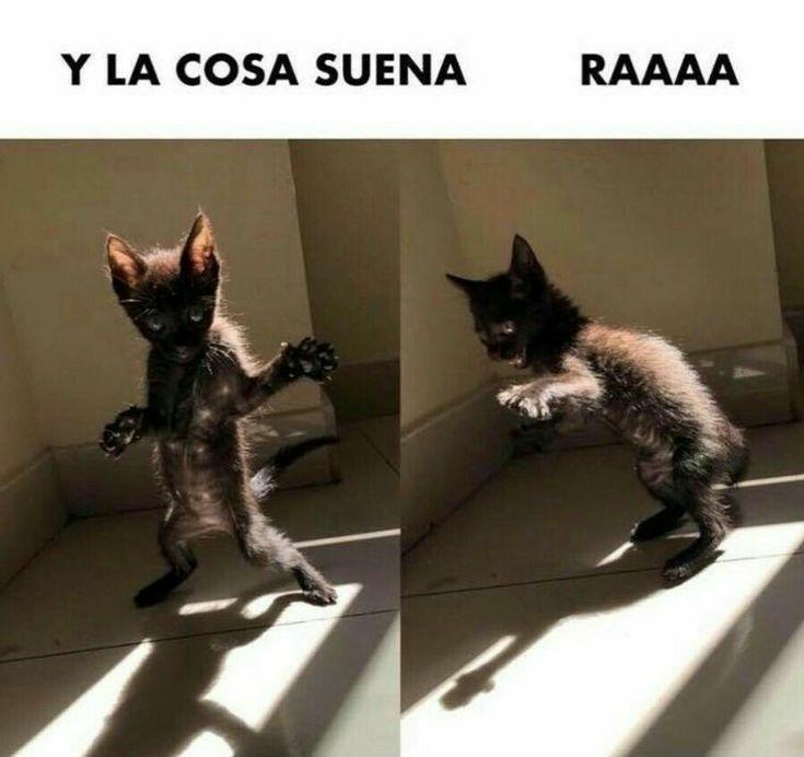 Gatito Bailando Un Amor Para Reir Un Poquito Humor Divertido Sobre Animales Memes De Animales Divertidos Memes De Perros Chistosos
