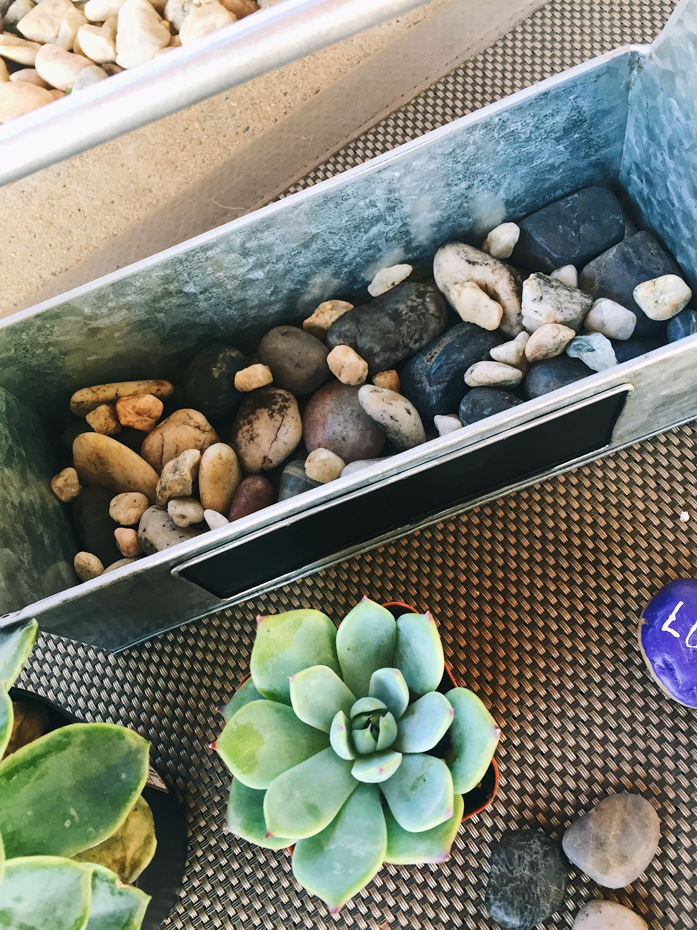 Fast and easy succulent garden do it yourself succulents