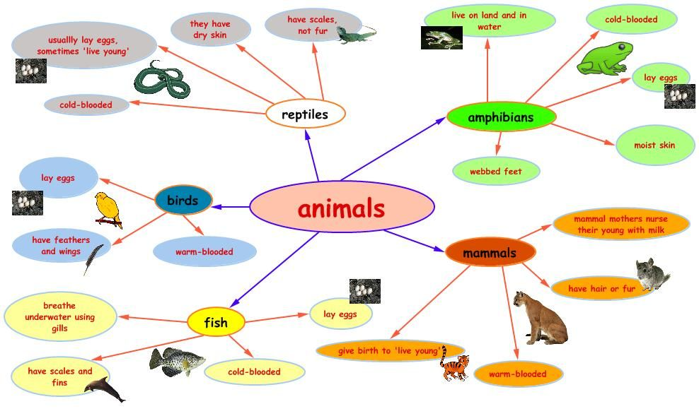Draw A Mind Map To Show The Classification Of Animal Kingdom And Vertebrates Google Search In 2021 Mind Map Mind Map Examples Map