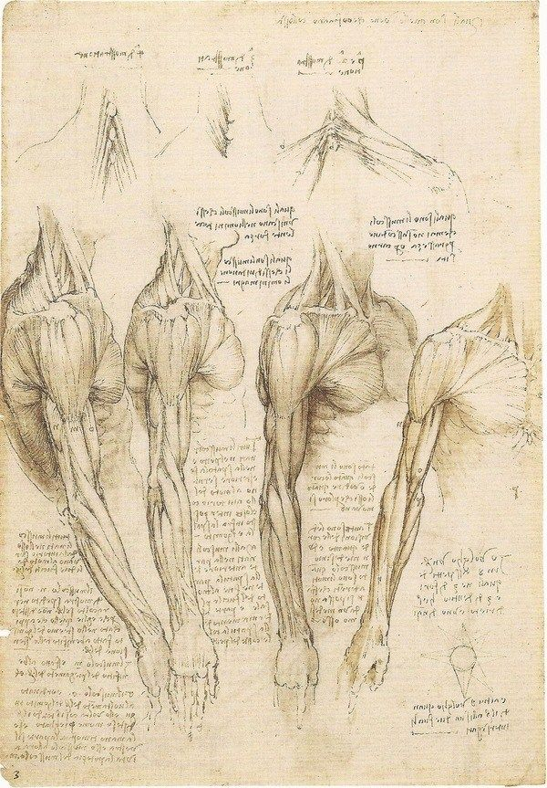 Rare Da Vinci Anatomical Drawings Go on Display | Anatomía, Dibujo y ...