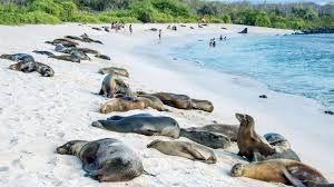 Znalezione obrazy dla zapytania galapagos islands tourism