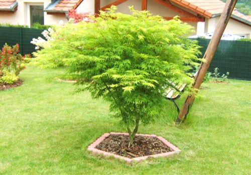 les rables japonais de sandrine jardin a planter pinterest erable du japon japon et jardins. Black Bedroom Furniture Sets. Home Design Ideas