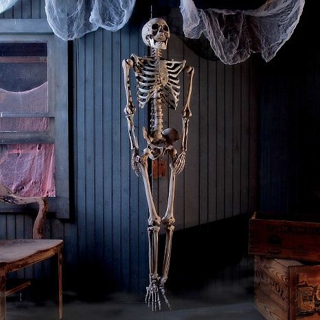 Improvements 5\u0027 Life-size Halloween Skeleton This is Halloween