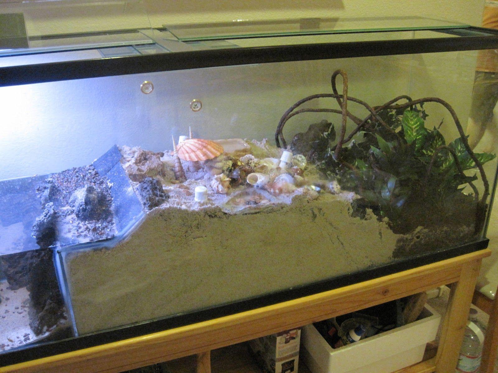 Land Hermit Crab Habitat Ideas Www Topsimages Com