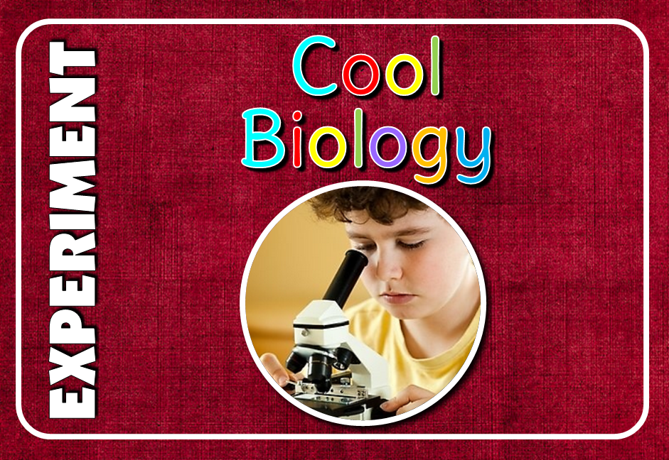 A collection of cool biology experiments. Biology