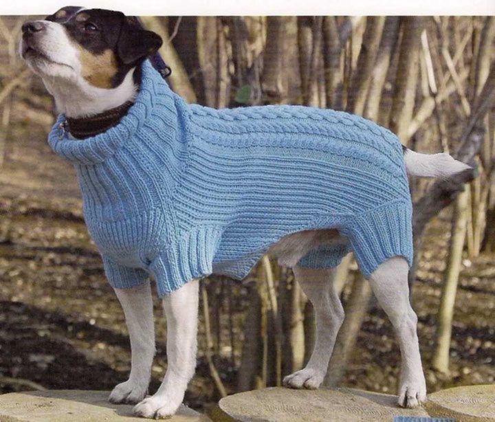 интересно фото собак водолазка писатель, пунктуацию