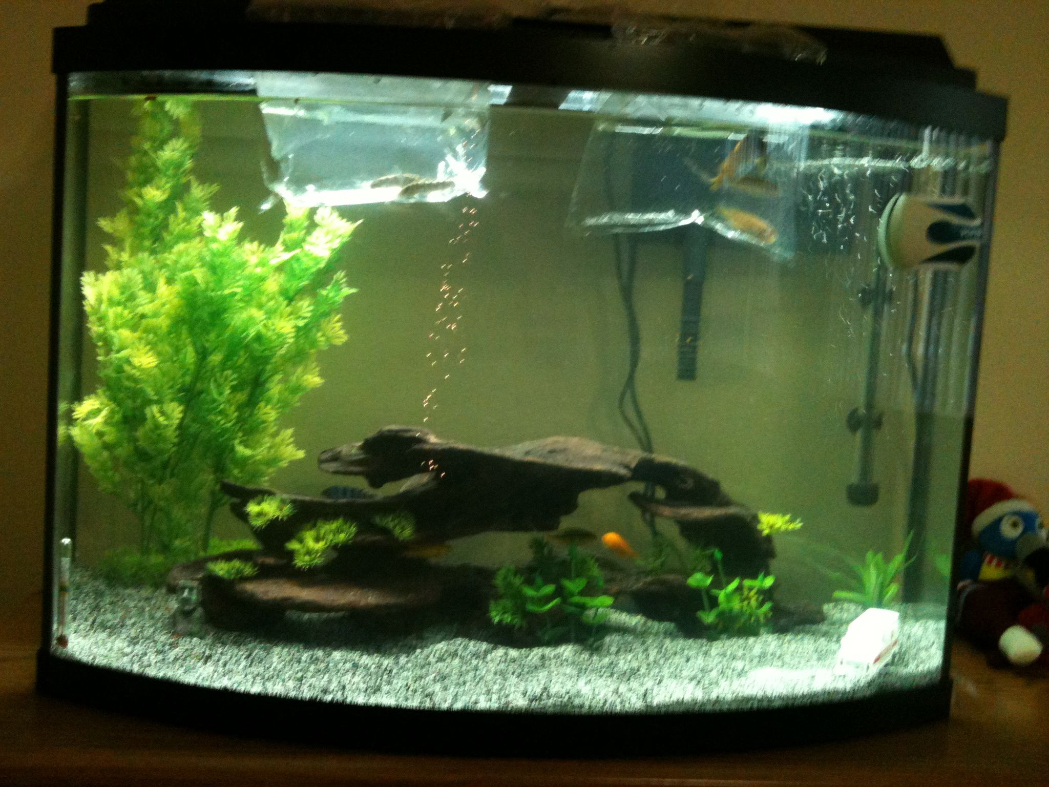 Our fish tank!!!!!11fish