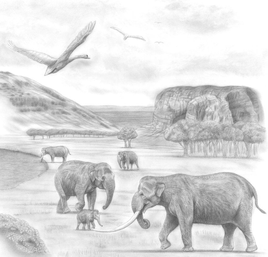 Mediterranean Dwarf Elephants With The Pdf Link By Jagroar Deviantart Com On Deviantart Kleurplaten