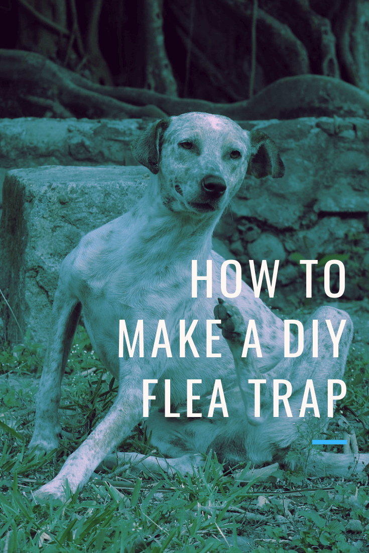 How To Get Rid Of Fleas Without Spending Money