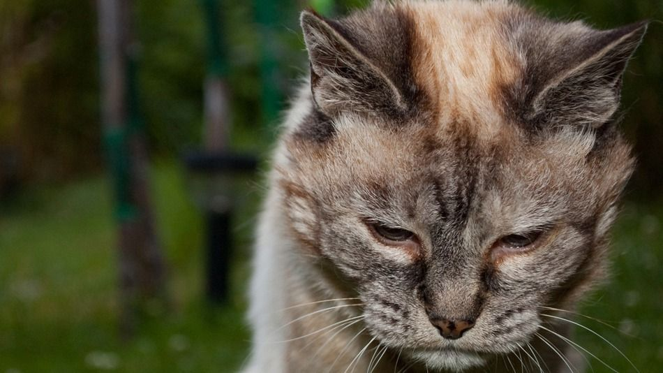 This Retirement Home For Cats Is A Balm For Your Weary Heart Old Cats Cats Cat Quotes