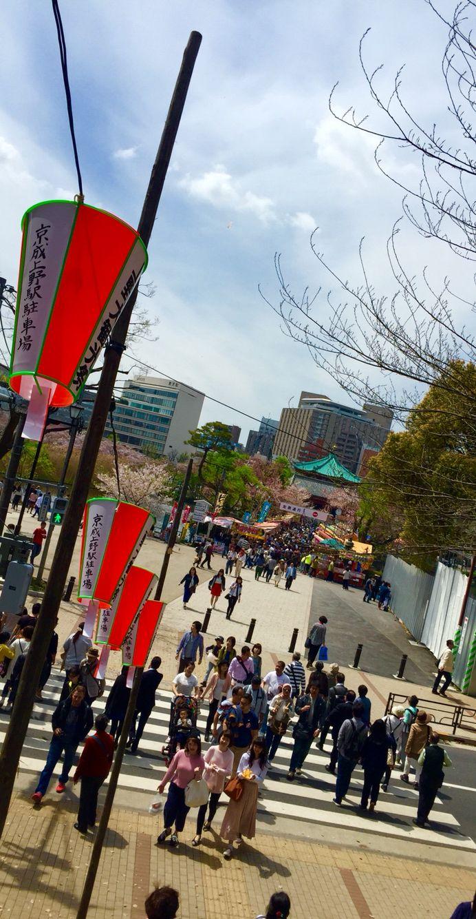 Shinobazu Park with Sakura