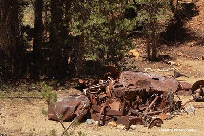 old car with trees.  There is so many artifacts of stuff left over from the Consolidated mine Company.  This is an old pickup truck.  There is not much left of it.  It is nice that they have left it there for us to see