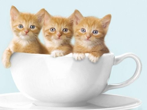 Three Little Cats WallpapersWebshots Collections 1 Wallpapers Pictures Free Download