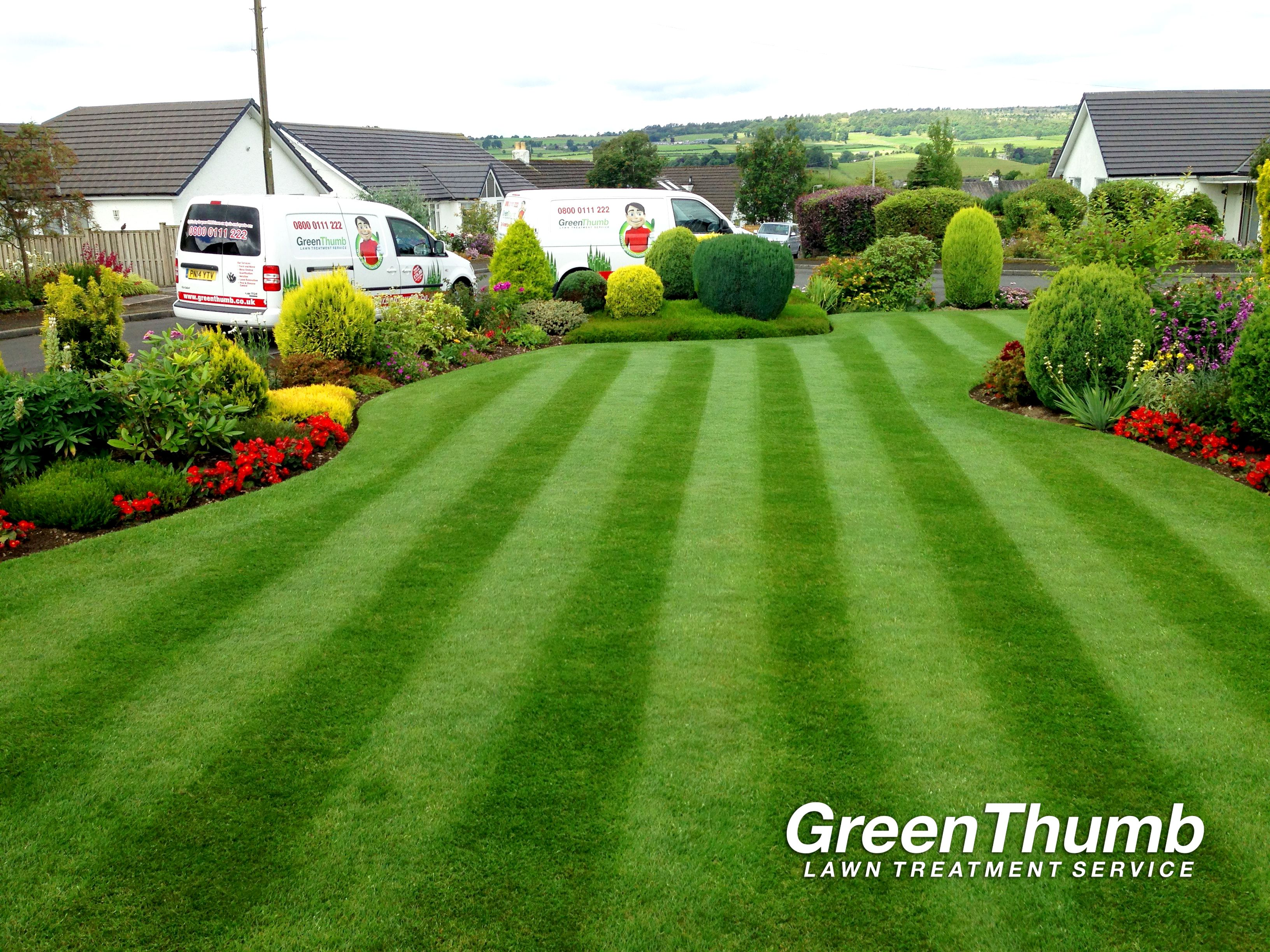 Want A Beautiful Lawn That Looks As
