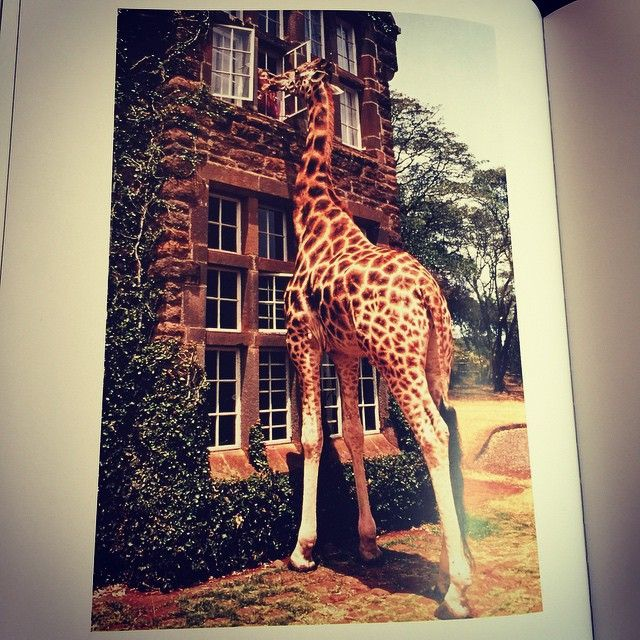 How amazing is this picture from @katespadeny 's new book 'places to go, people to see'. ❤️