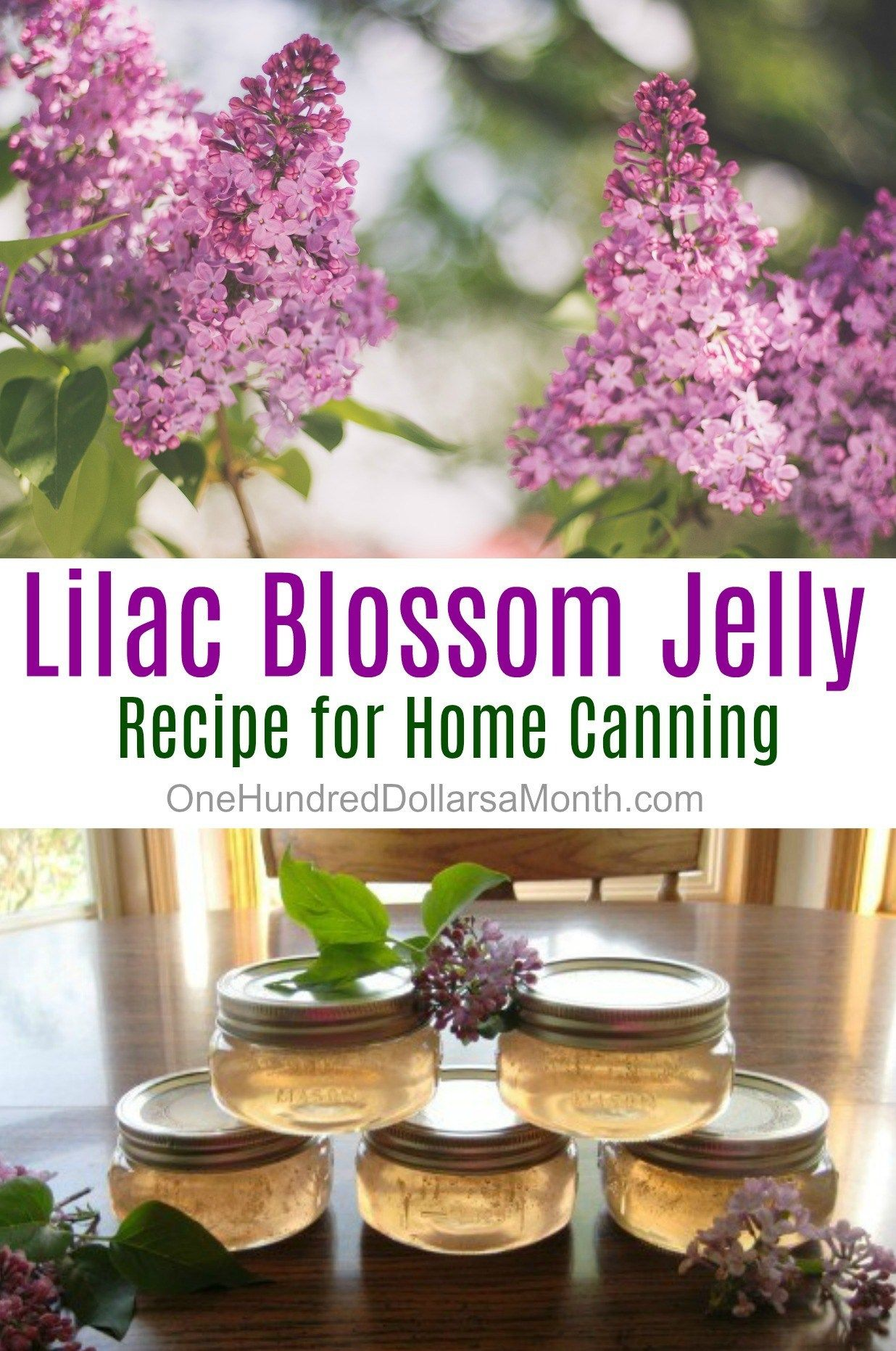 Canning 101 Lilac Blossom Jelly One Hundred Dollars A Month Jelly Recipes Home Canning Recipes Lilac Blossom