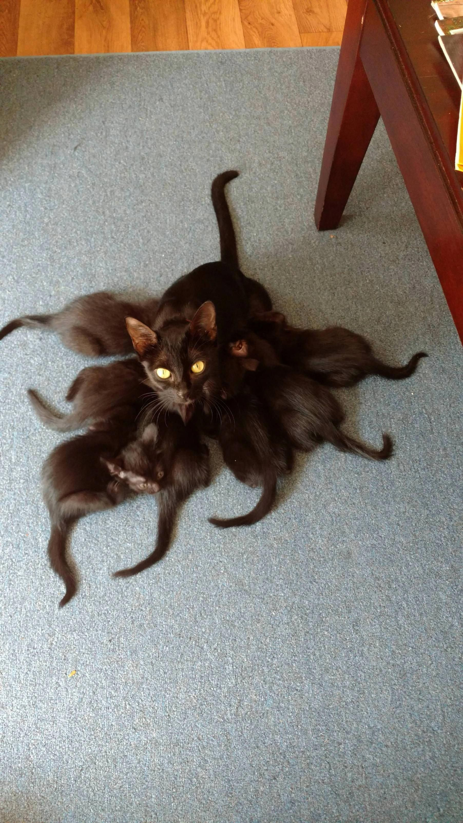 I First Thought This Was An Octopus Which On Second Look It Kinda Is Cats Crazy Cats Funny Animal Pictures