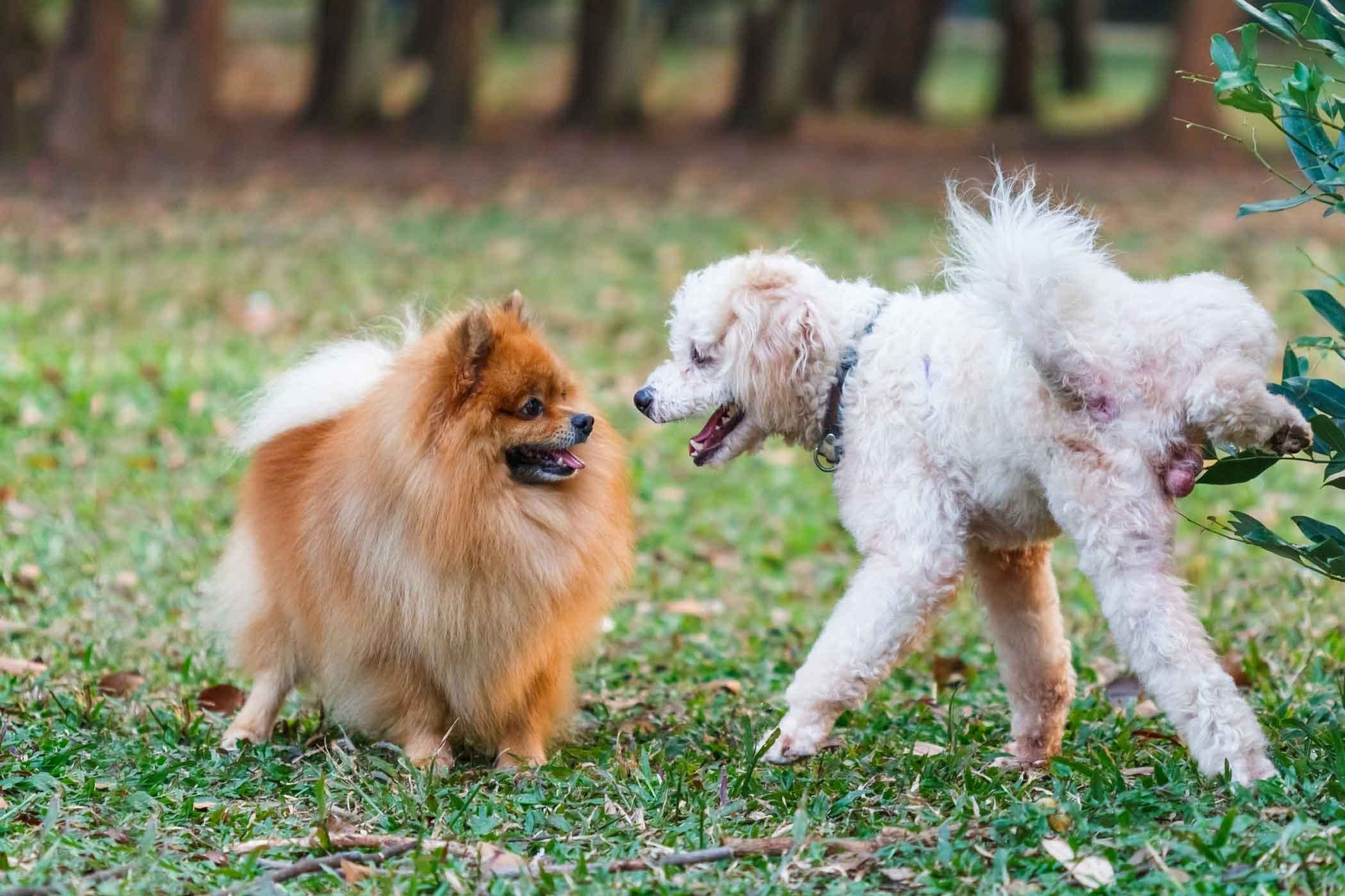 How To Train Your Rescue Dog To Pee Outside Dogs Dog Minding